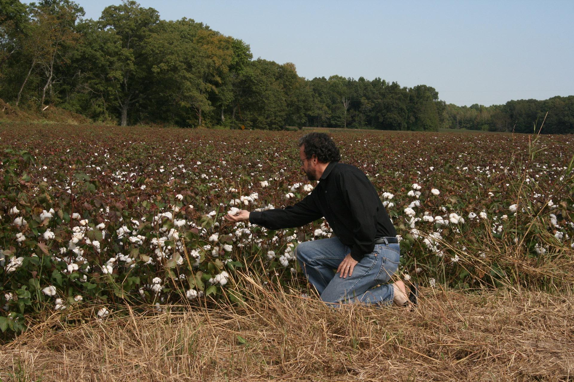 Cotton_4097_sm